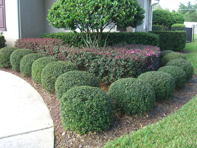 Tolerant Landscape Design Photos Likewise Landscaping Plants Florida